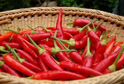 7 curiosidades sobre as Pimentas