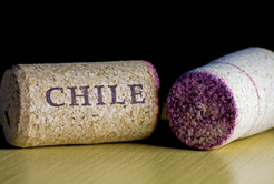 A tradição dos Vinhos Chilenos