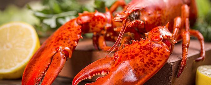 mar-del-plata---blog---especial-lagosta
