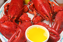 Diversas opções de lagosta