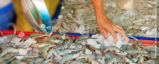 Mar Del Plata - Blog -Como escolher um bom camarão