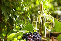 Conheça mais sobre os vinhos verdes